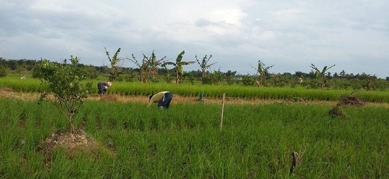 Gemawan adakan pemetaan partisipatif tata ruang desa Sungai Kelambu.