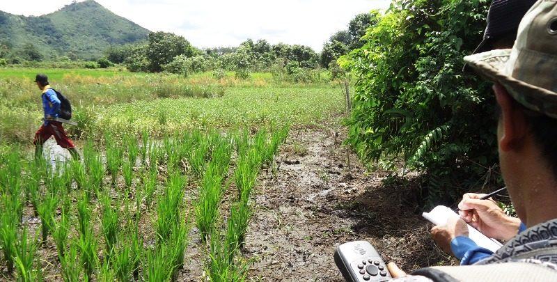 26-Gemawan petakan sawah di rawa dan bukit di Sintang