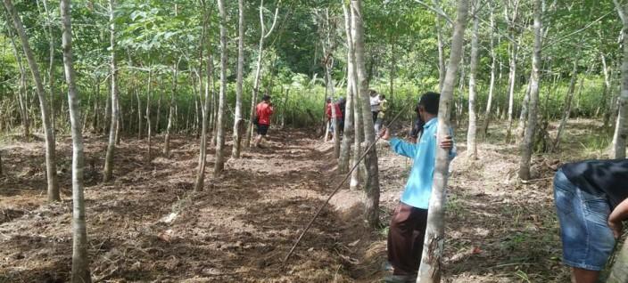 KARET LOKAL: Tim Gemawan bersama Poktan Karet Usaha Bersama pimpinan Aswin memonitoring pohon karet lokal. Foto: Stepanus Kardi/GEMAWAN.