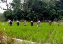 Food Fighters in Penakalan Village – Women Farmers