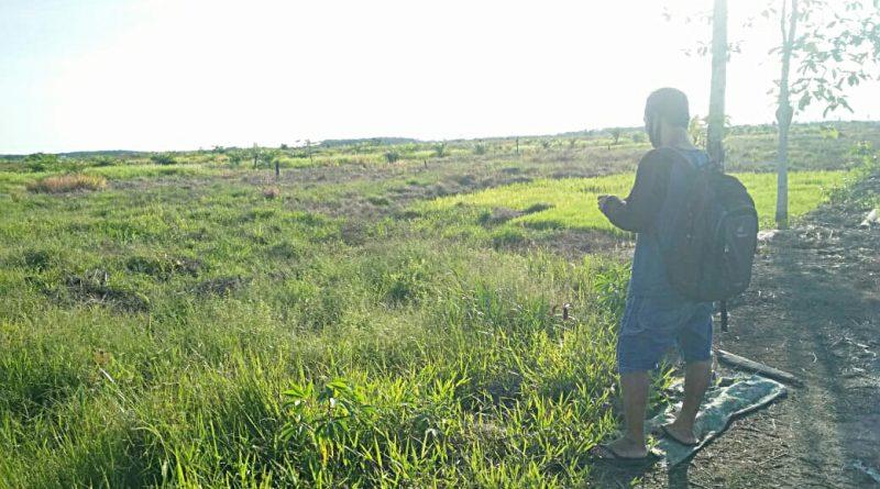 Revegetation of Burned Land in Maya Island